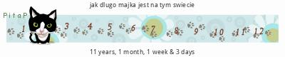 PitaPata Cat (KmCJ)